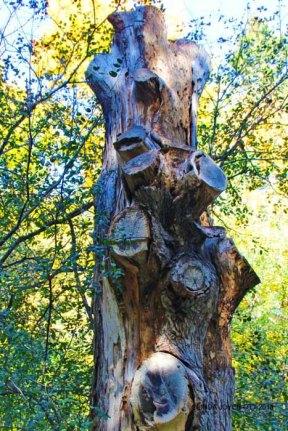 TREE TOTEM