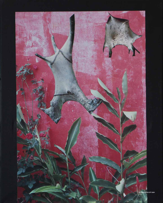 Jumpin' for Joy photo collage by Linda Joyce Ott features tent caterpillar photos on red wall